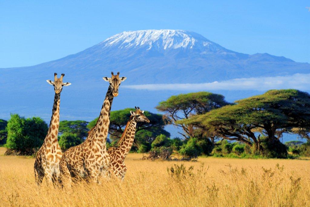 Kenya Safari. Travel to Africa