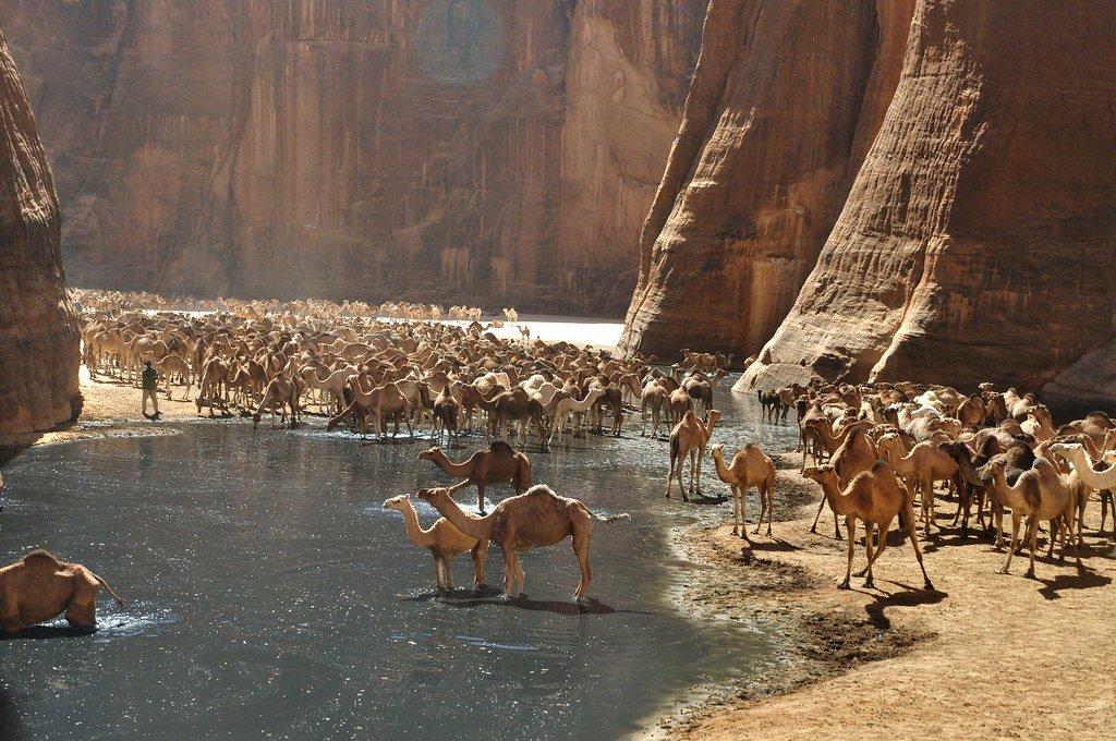 canyon Guelta d'Arche